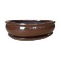 Bonsai + plato 31 cm Rojo Cobre