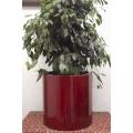 Coleccion Petunia Rojo Set/4