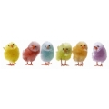 Pajaritos Color, Pack de 12 und